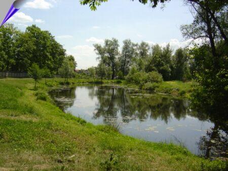 Zdjęcie Widok na rzekę Nieciecz w Widawie _004_004_556